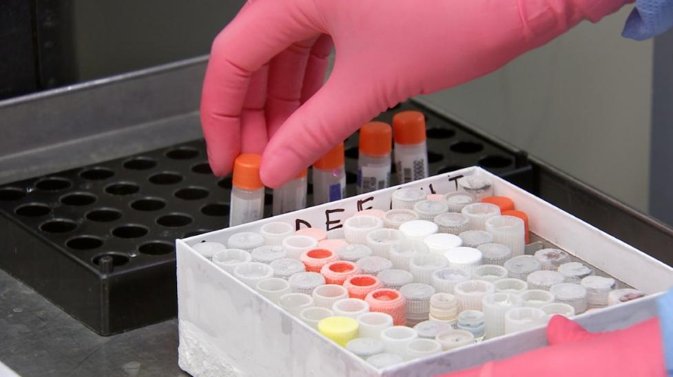 189 ПОЛОЖИТЕЛНИ PCR ТЕСТА ОТ 2161 ПРОБИ В ОТМИНАЛОТО ДЕНОНОЩИЕ